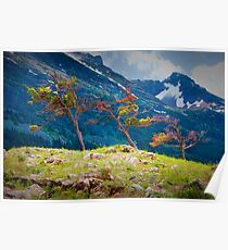 Pines on a rocky ridge in Glacier National Park Poster