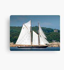 Bluenose II Sail into Gloucester Harbor Canvas Print