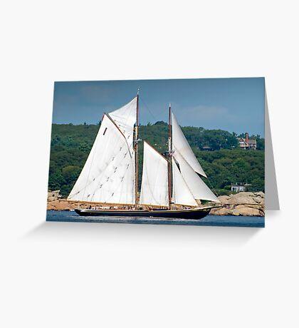 Bluenose II Sail into Gloucester Harbor Greeting Card