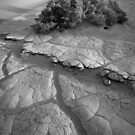 Death Valley by Inge Johnsson