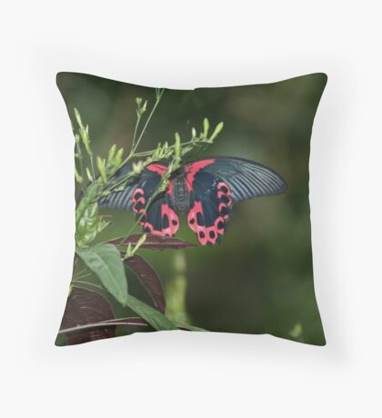 Mormon Butterfly Throw Pillow