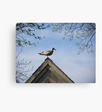 Is it Real, or is it Memorex? Canvas Print