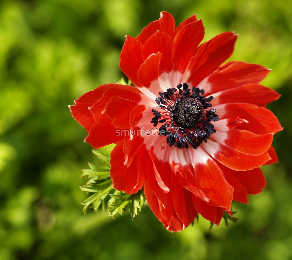 delightful red by smurfette57