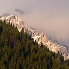 Cold rock, green forest by iulix