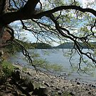 Tree By The Lake by Lindamell