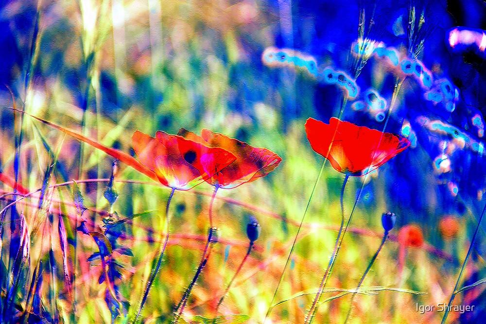 Secret Garden VII by Igor Shrayer