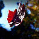 Fall.... by Rinaldo Di Battista