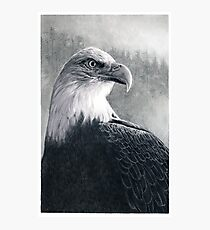 American Bald Eagle Photographic Print