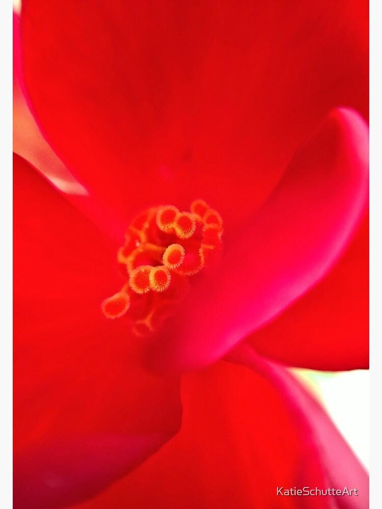 Red Flower by KatieSchutteArt