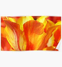 Tulip...supermacro backlight Poster