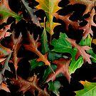Autumn colour... by Malcolm Garth