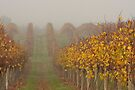 Autumn Vineyard by Timo Balk