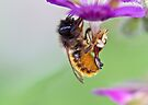 Red Mason Bee by inkedsandra