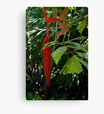 Hanging Red Canvas Print