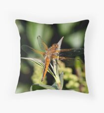 scarce chaser Throw Pillow