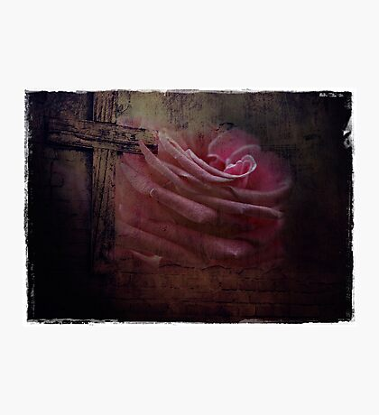 Blessed Rose Photographic Print