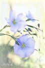 Pretty blue by aMOONy
