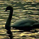 Twilight swan by Meladana