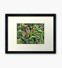 RED GARDEN FLOWERS. Framed Print