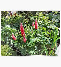 RED GARDEN FLOWERS. Poster