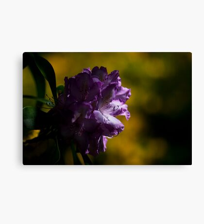Moody Rhododendron Canvas Print