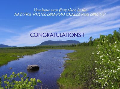 First Place Banner - NPC Group by MaryinMaine