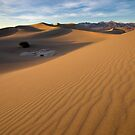 Sunset - Mesquite Sun Dunes by Clayhaus