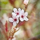 Spring into Pink by Teresa Young