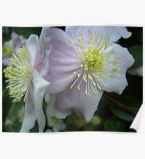 Pair of blushing beauties! Poster