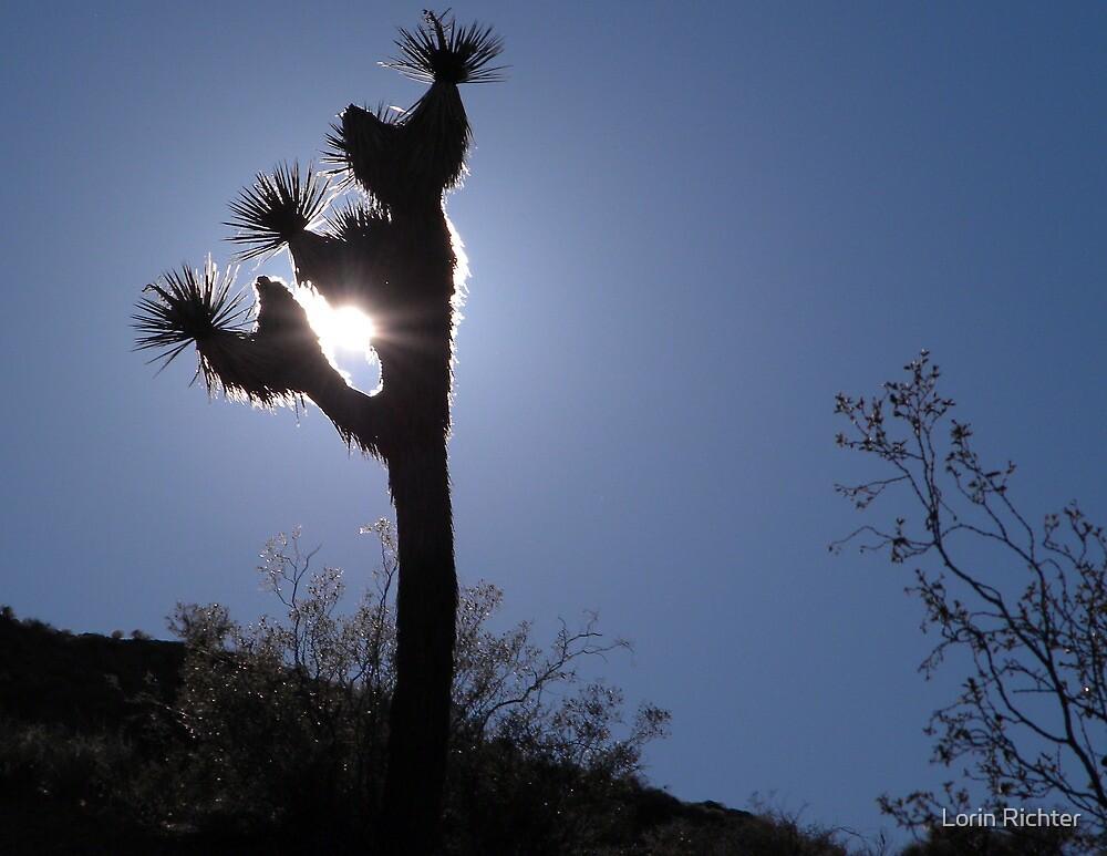 darkness in the desert by Lorin Richter