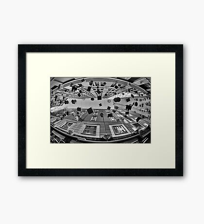 Wide Eyed - The Bird Cages - Sydney - Australia Framed Print