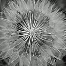 Coltsfoot Skeleton by WolfPause