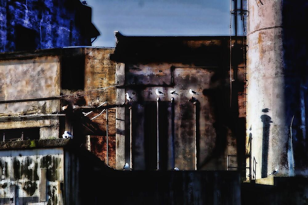 Alcatraz Birds by vincefoto