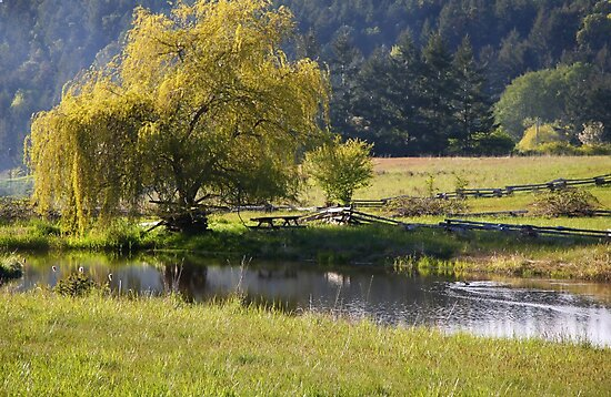 spring by the pond  by TerrillWelch