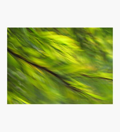 Winter Green Photographic Print