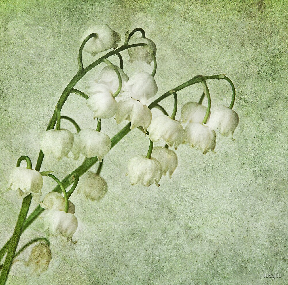 lily of the valley by lucyliu