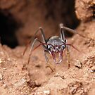 Inch ant on sentry duty - Science Park, Adelaide by Dan & Emma Monceaux