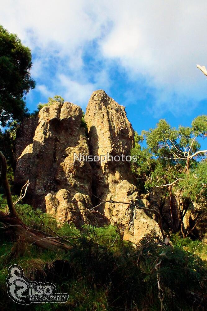 rock in bush  by Niisophotos