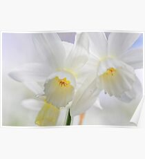 Dreaming Daffodils Poster