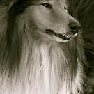 The Rough Collie  by Lou Wilson