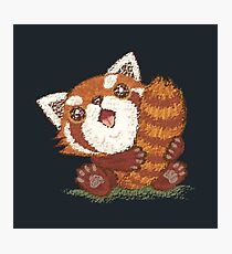 Red panda which holds a tail Photographic Print