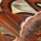 Atlas Moth Wing by Michaela1991