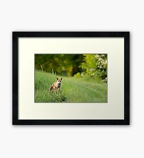 Mr. Fox Framed Print
