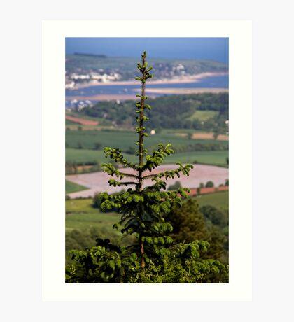Tree View Art Print
