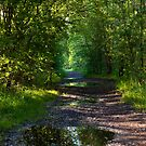 Lady through the trail by Richard Jackson