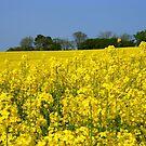 Yellow Rape Field.. by eithnemythen
