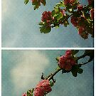 Spring - Pink Hawthorn by Sybille Sterk