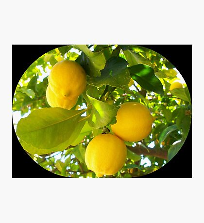 Juicy lemons on a tree Photographic Print