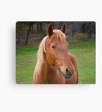 Brown Horse Leinwanddruck