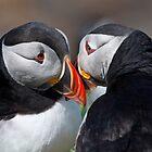 Eye to eye contact! by Shaun Whiteman